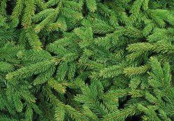Gdzie można oddać świąteczne drzewko?